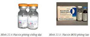 VACCIN LAO Vaccinum tuberculosis (BCG) cryodesiccatum (4)