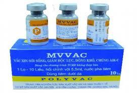VACCIN SỞI MORBILLORUM VIVUM (5)